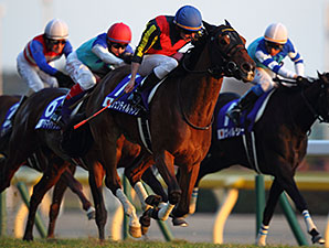 Gentildonna wins the 2013 Japan Cup.