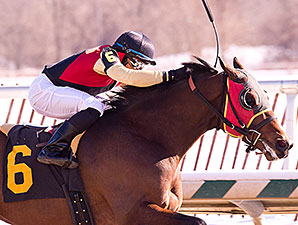Germaniac wins the 2014 Frank Whiteley, Jr. Stakes.