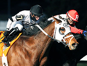 Ghost Is Clear wins the 2015 Forego Stakes.