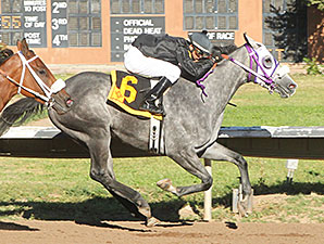 Ghost Realms wins the 2014 New Mexico State Fair Thoroughbred Breeders Stakes.