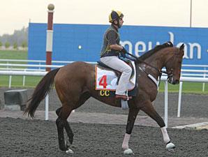 Gio Ponti Dubai 2011