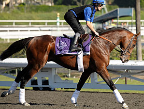 Gladiatorus at the 2009 Breeders' Cup.