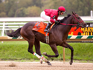 Glib wins the 2011 Maryland Million Nursery.