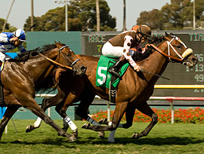 Global Hunter wins the 2010 American Handicap.