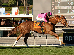 Go West Marie wins the 2015 Sunshine Millions Filly and Mare Turf Sprint Stakes.