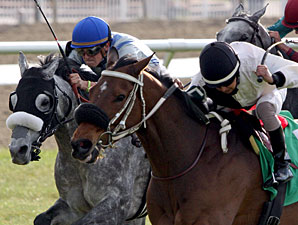Gold Wonder wins the 2009 Lacombe.