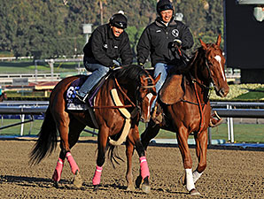Goldencents - 2013 Breeders' Cup, October 30, 2013.