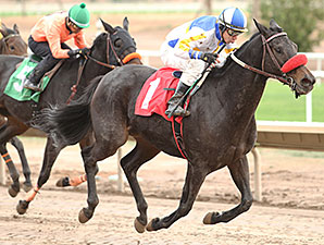 Got an Itch wins the 2013 Cactus Flower Stakes.