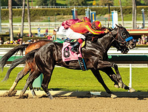 Govenor Charlie - Maiden Win, February 13, 2013.