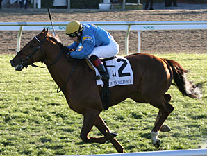 Gran Estreno wins the 2011 Col. E. R. Bradley Handicap.