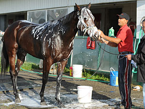 Grand Adventure at.Woodbine on September 18, 2010.