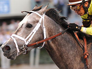 Graydar wins the 2013 Donn Handicap.