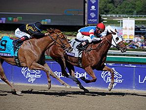 Groupie Doll wins the 2013 Breeders Cup Filly and Mare Sprint