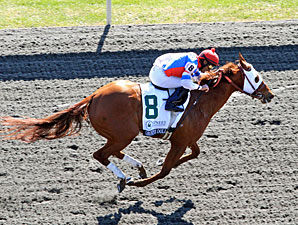 Groupie Doll wins the 2012 Vinery Madison.
