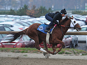 Groupie Doll Works at Belmont Park, November 16, 2013.