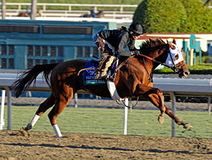 Groupie Doll works at Santa Anita 10/29/2012.
