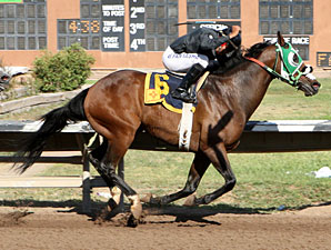Groushy Apadana wins The 2012 ET Springer Stakes.