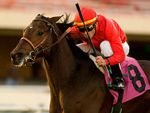 Haimish Hy races in the Hollywood Derby.