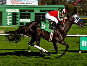 Halo Dolly wins the 2012 Miss America Stakes.