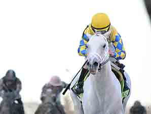 Hansen wins the 2012 Gotham Stakes.