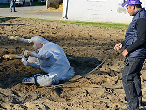 Hansen, rolling in the sand pit. April 7, 2012.