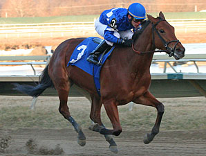 Harissa wins the 2011 Sleigh Ride.