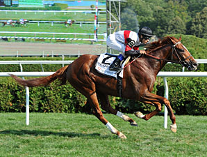 Harrods Creek wins the 2012 John's Call.