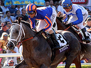 Havana finishing 2nd in the 2013 Breeders' Cup Juvenile.