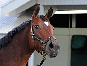 Havre de Grace at Keeneland, October 28, 2011.