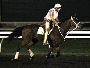 Havre de Grace and Larry Jones work in the morning 10/11/2011.