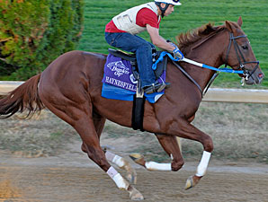 Haynesfield works towards the Breeders' Cup.