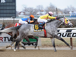Head Heart Hoof wins the 2013 Toboggan Stakes.