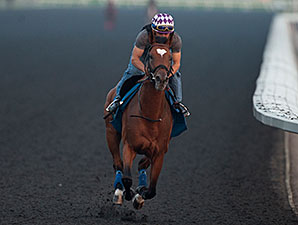 Heart to Heart jogs at Woodbine Racetrack on June 30, 2014.