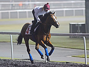 Hillstar, Dubai World Cup 2014