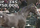 Keeneland Sept Yearling Sale: Hip 345 in the Ring