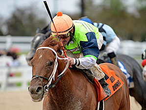 Hip Four Sixtynine wins the 2013 Sam's Town Stakes.