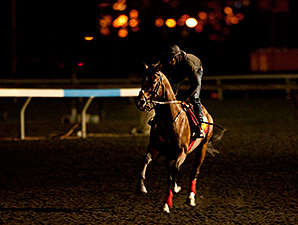 His Race to Win - Woodbine, September 12, 2014.