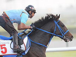 Hokko Tarumae - Dubai 2014