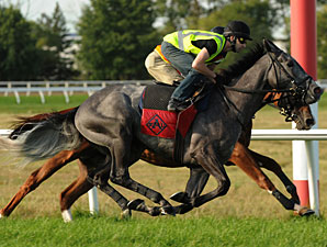 Hollinger - Woodbine, September 13, 2011.