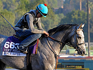 Holy Lute preps for the Breeders' Cup.