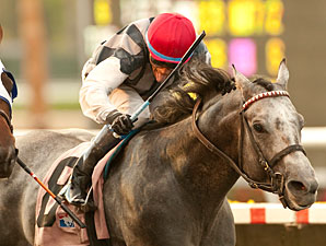 Holy Lute wins the 2013 El Cajon Stakes.