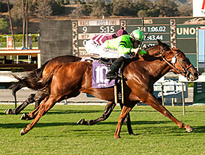 Home Run Kitten wins the 2014 Eddie D Stakes.