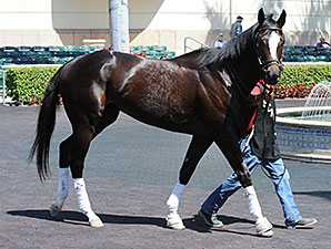 Honor Code preps at Gulfstream Park March 4, 2014.