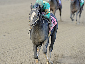 Honor Code, Allowance Win, Aqueduct, November 22, 2014.