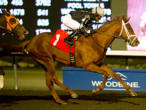 Honorable Guest wins the 2012 Frost King.