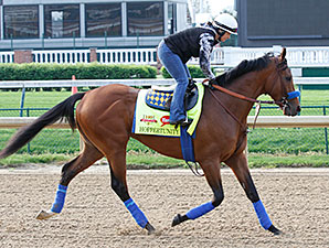 Hoppertunity jogs at Churchill Downs.