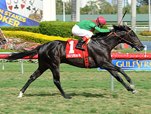 Howe Great wins the 2012 Palm Beach.