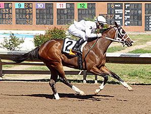Humarumba wins the 2014 Dessie and Fern Sawyer Futurity Trial.