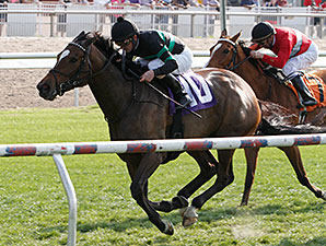 I Dazzle wins the 2014 Red Camelia Stakes.