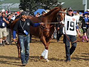 I'll Have Another begins his journey to the saddling paddock.